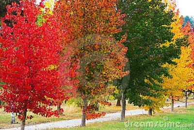 Ukrasna stabla nižeg rasta – Grama Sadnja