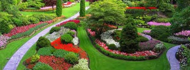 Čarobni vrt Vrt2