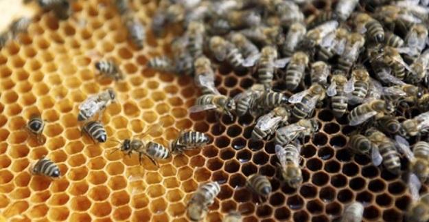 pčele u jesen