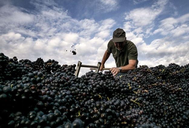 proizvodnja vina